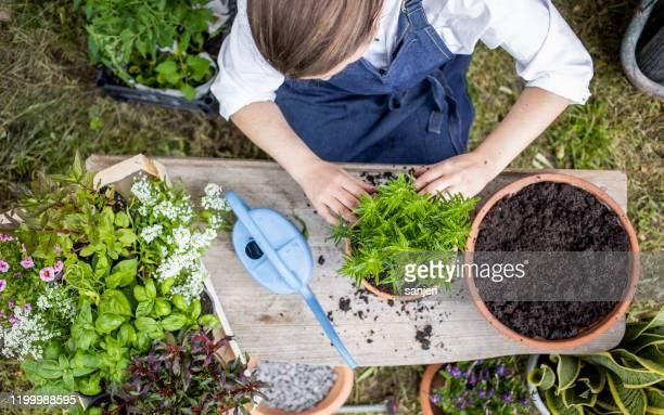 ハーブを植える女性 - 造園師 ストックフォトと画像
