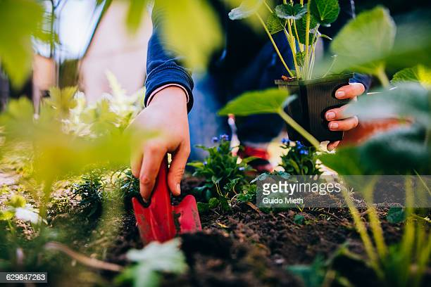 Woman planting in the garden.