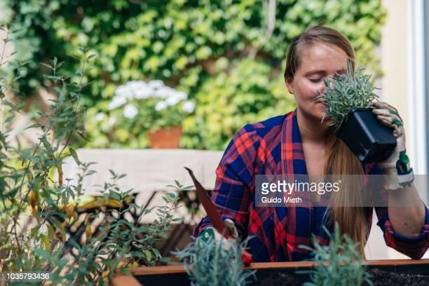Woman planting lavender in plant pot.