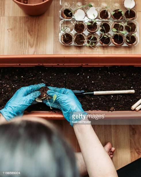 mulher que planta vegetais orgânicos em casa - vertical - fotografias e filmes do acervo