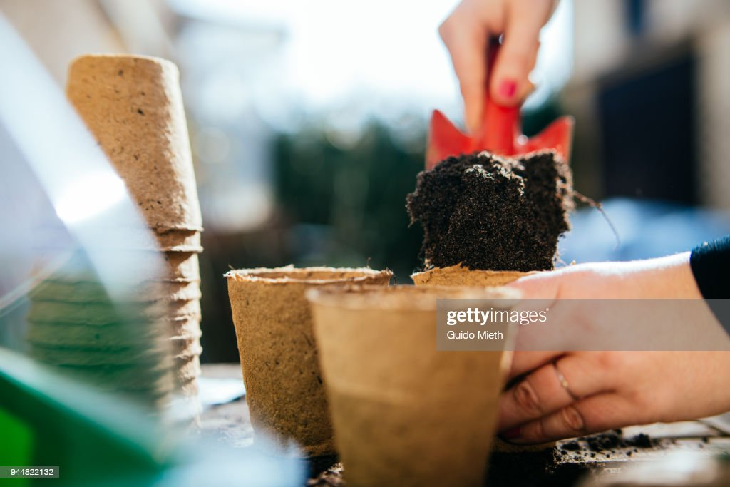 Woman planting seed. : Stock Photo