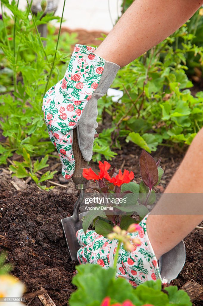 Woman planting seedlings : Stock Photo