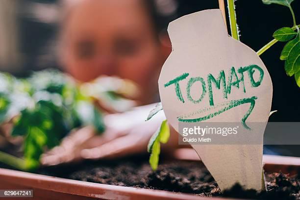 Woman planting tomato.