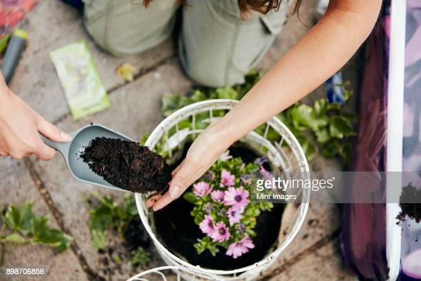 A woman planting up a basket with flowers, and adding soil around the base of the plant.