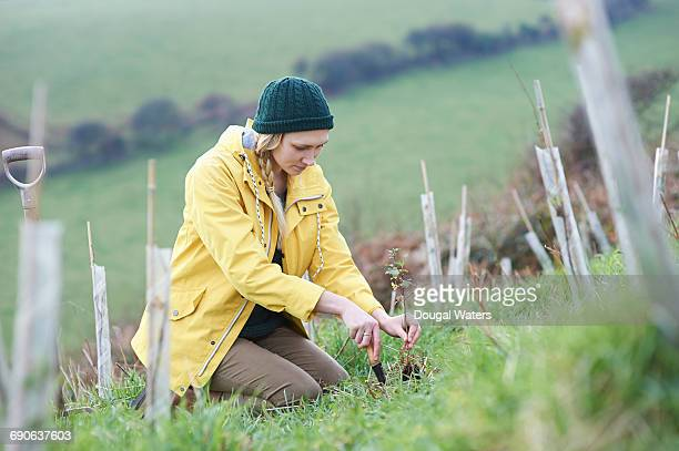 woman planting young tree in countryside. - 植える ストックフォトと画像