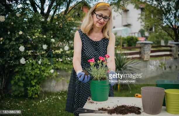 woman plants flowers in a pot - 60 64 years stock pictures, royalty-free photos & images