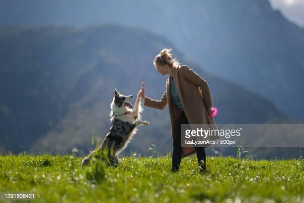 woman playing with dog in mountain area,poland - collie fotografías e imágenes de stock