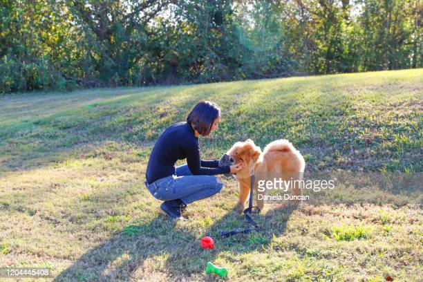 woman playing with dog outdoors - chow dog stock pictures, royalty-free photos & images