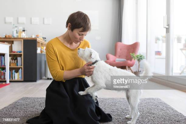 woman playing with her dog in the living room - yellow perch stock photos and pictures