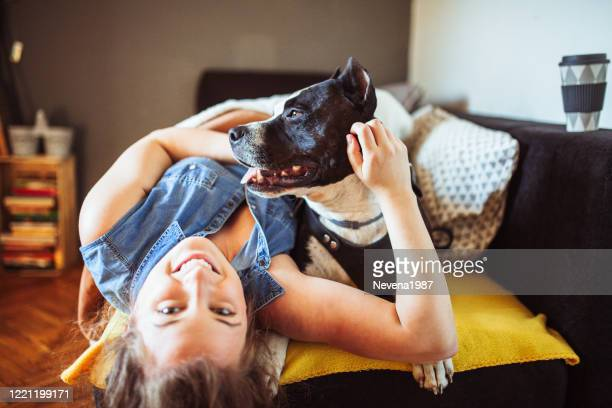 woman playing with her dogs - pit bull terrier stock pictures, royalty-free photos & images