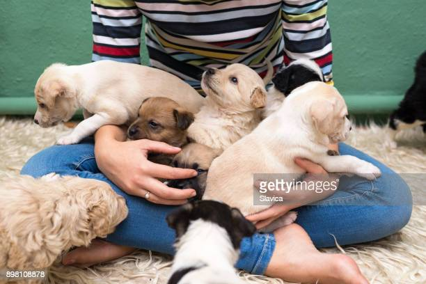 woman playing with puppies - group of animals stock pictures, royalty-free photos & images