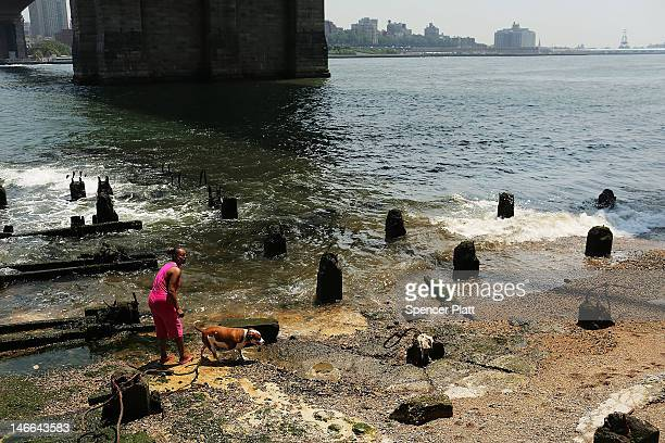 A woman plays with her dog on a small beach along the East River during record breaking heat on June 21 2012 in New York City New York City and much...