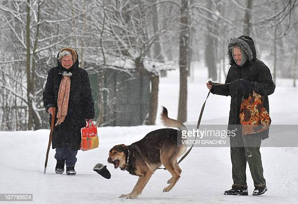 A woman plays with her dog trying to catch a glove as she walks in a snow covered park in the Belarusian capital Minsk on December 28 2010...