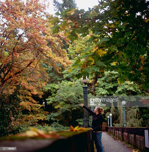 woman (20-25 years) pointing at tree - この撮影のクリップをもっと見る 2025 stock pictures, royalty-free photos & images