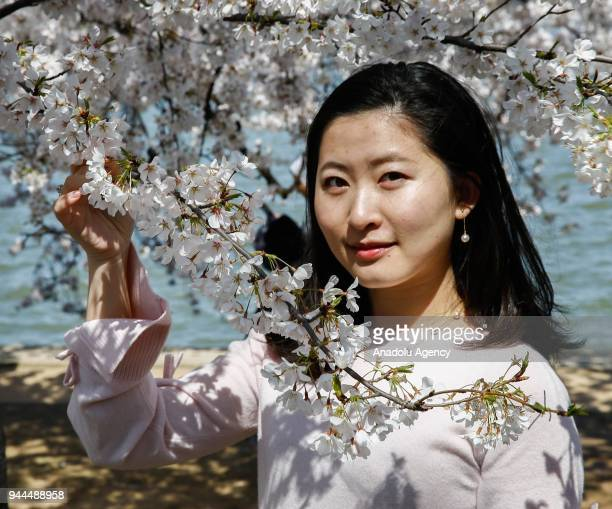 A woman poses for a photo with the blooming cherry trees which were sent from Tokyo after it was selected as 'town twinning' in 1912 along the Tidal...