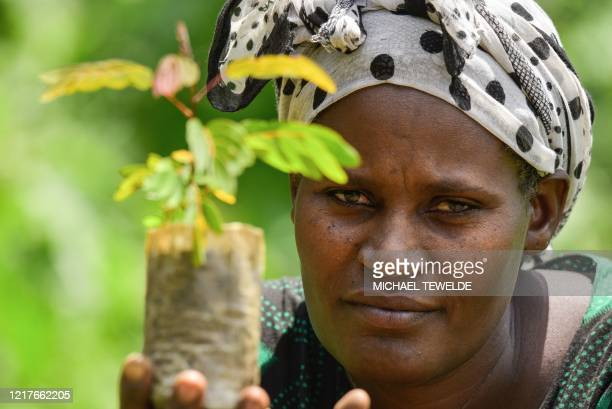 A woman poses for a photograph as she takes care of seedlings at a nursery outside of Buee about 100km from Addis Ababa in southern Ethiopia on June...