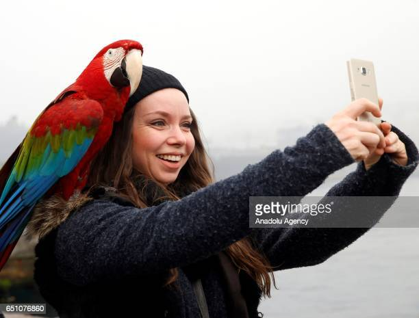 A woman poses with the parrot 'Pasha' in Istanbul Turkey on March 7 2017 43yearold background actor Nazim Cihan's parrot 'Pasha' attracts people's...