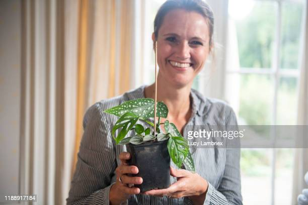 woman posing with fresh planted cuttings - begonia stock pictures, royalty-free photos & images
