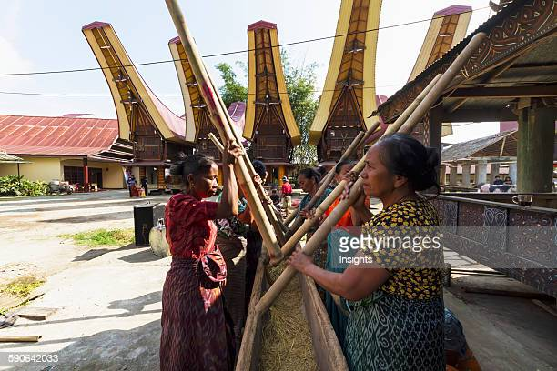 Woman pounding rice at a rante the ceremonial site for a Torajan funeral ceremony in Rantepao Toraja Land South Sulawesi Indonesia
