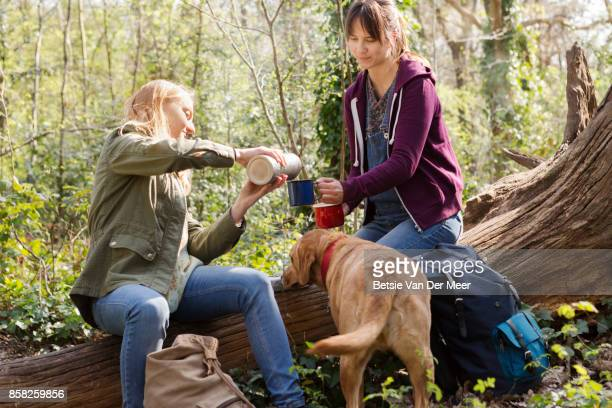 woman pours drink in cups, while dog is looking on. - um animal - fotografias e filmes do acervo