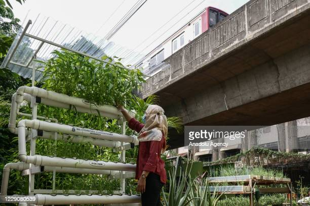Woman practising urban farming at a playground garden as a solution to a land shortage in Jakarta, Indonesia on October 15, 2020. To mark this year...