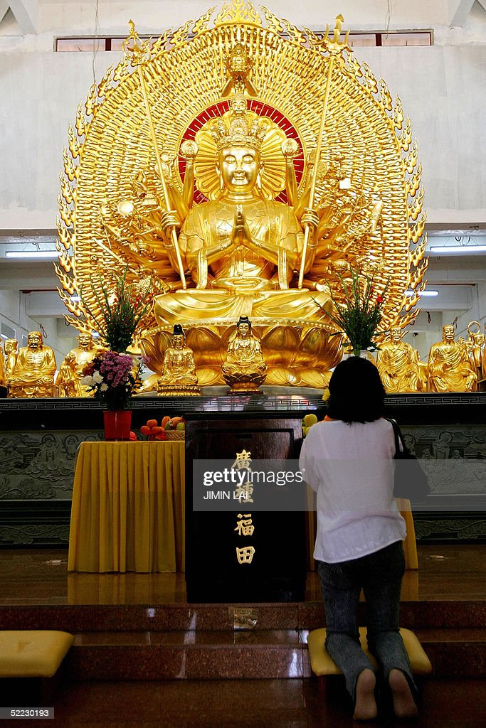 A woman prays to a statue of Buddha at a : News Photo