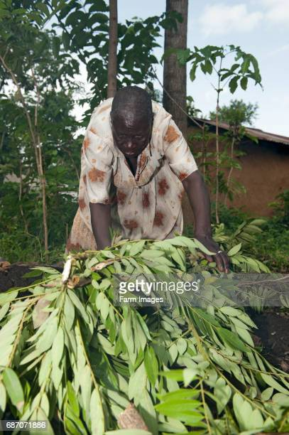 Woman preparing a fire pit to make charcoal to sell at market Kenya
