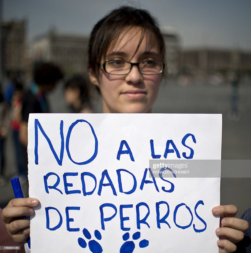 A woman protests after the police caught dozens of stray dogs thought to be involved in the death of four people in Mexico City, on January 12, 2013. Animal rights activists have voiced doubts that dogs are to blame for the death of at least four people in a country torn by runaway crime, but prosecutors insist that only canines could have caused such carnage, with bones exposed and body parts bitten off. Hundreds of Mexico City residents took their dogs to mobile sterilization units Thursday as the city stepped up a campaign to reduce the number of street dogs after a string of deadly attacks. The city prosecutor's office said stray dogs mauled four people to death, and perhaps two more victims, in the past two weeks.