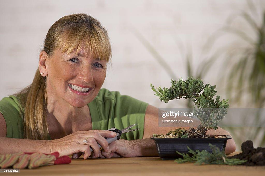 Woman pruning bonsai tree : Stockfoto