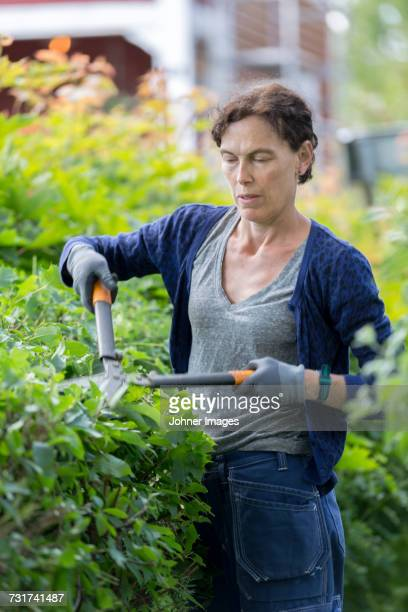 woman pruning hedge - pruning shears stock photos and pictures