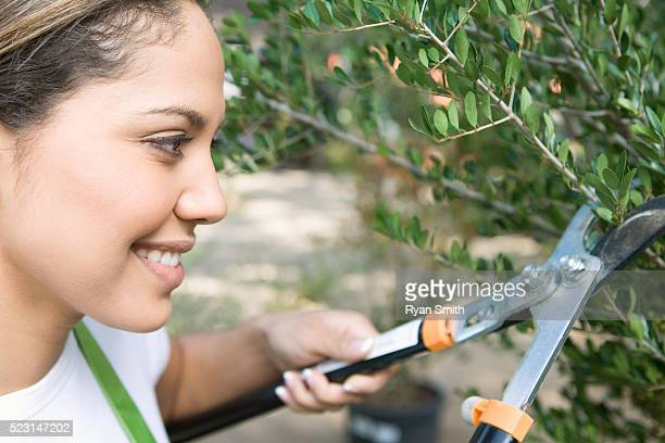 Woman Pruning Hedges