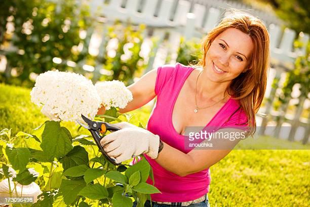 Frau Stutzen Hortensie Pflanzen im Garten