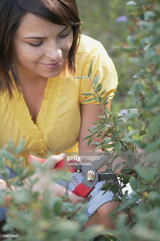 Woman pruning plant : Stock-Foto