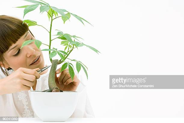 woman pruning potted silk floss tree - bonsai tree stock pictures, royalty-free photos & images