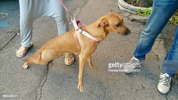 Woman Pulling Dog While Standing On Street