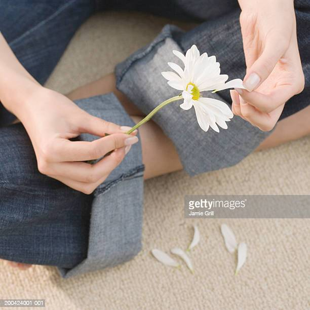 woman pulling petals off daisy, close-up - hands in her pants stock pictures, royalty-free photos & images