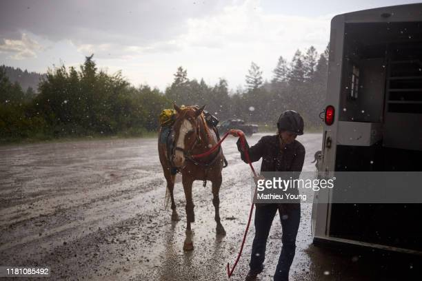 woman pulls horse - ranch stock pictures, royalty-free photos & images