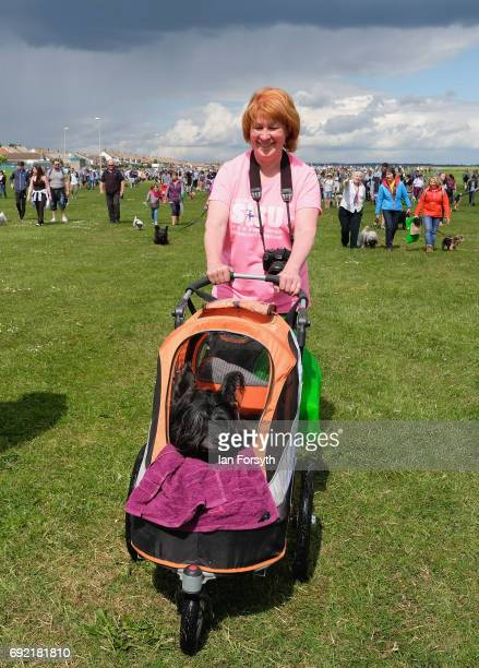 A woman pushed her dog in a buggy as she joins thousands of excited participants and their owners to take part in the Great North Dog Walk on June 4...