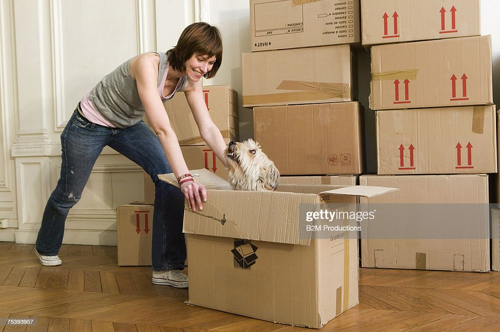 Woman pushing cardboard box with dog, smiling : Stock Photo