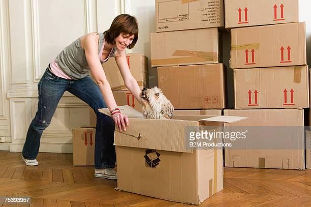woman pushing cardboard box with dog, smiling - empurrar atividade física imagens e fotografias de stock