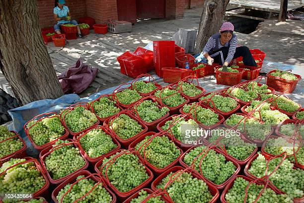 A woman puts the grape into basket and plans to sell on August 18 2010 in Turpan of Xinjiang Autonomous Region China Turpan basin is the second...