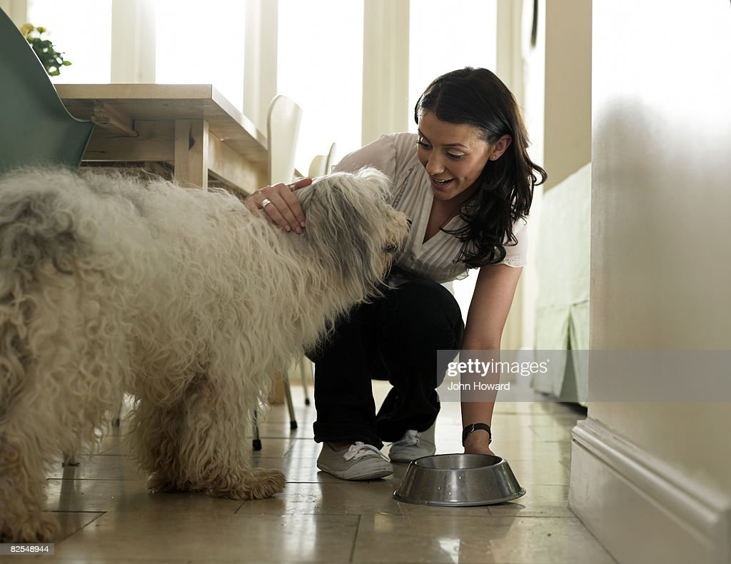 Woman putting water bowl down for her dog : Stock Photo