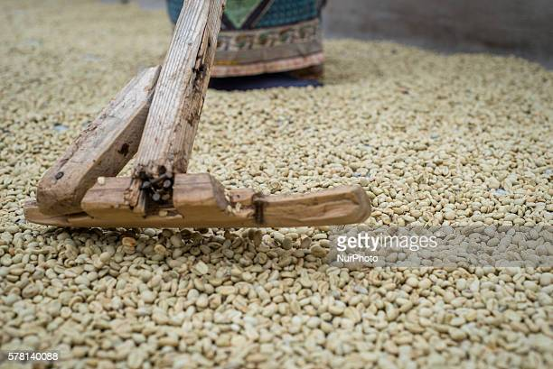 A woman rakes coffee beans over the patio for sun drying at the Mubuyu Farm coffee factory Eighty kilometers South of Lusaka Zambia on 17 July 2016...