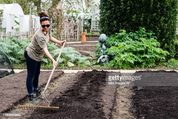 woman raking freshly laid bed of soil in a vegetable garden. - gardening stock pictures, royalty-free photos & images