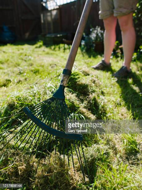 woman raking grass in her garden - lawn stock pictures, royalty-free photos & images