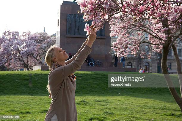 Woman reaches up to smell magnolia blossom, spring