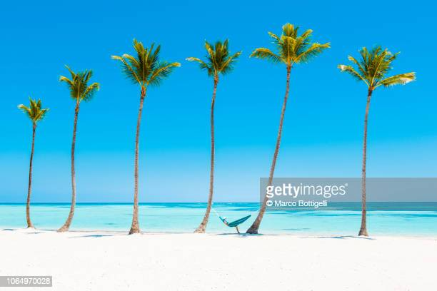 woman reading on a hammock on a tropical beach - mar do caribe - fotografias e filmes do acervo
