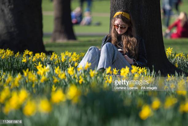 Woman reads among daffodils in St James Park, London, as many parts of the UK enjoyed unusually warm temperatures.