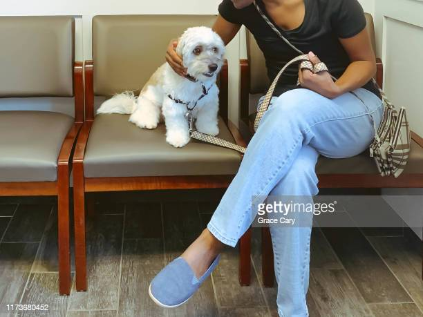 woman reassures dog at vet - animal body stock pictures, royalty-free photos & images