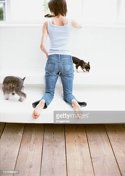 woman relaxed on sofa - long haired chihuahua stock photos and pictures